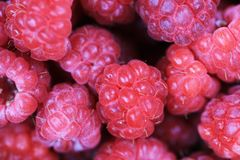Red raspberries texture. As very nice natural food background Royalty Free Stock Photos