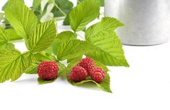 Red raspberries with tin bucket and leaves on white. Colorful and crisp image of red raspberries with tin bucket and leaves on white Stock Photo