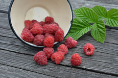 Red raspberries in a white bowl Stock Image