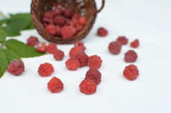 Red raspberries on white table, detail. Red raspberries scattered on white table, detail Stock Photo