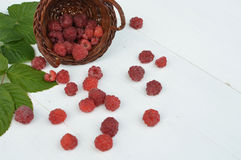 Red raspberries on white table. Red raspberries spilled from the basket on a white table Royalty Free Stock Photo