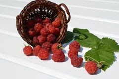 Red raspberries in the wicker basket Royalty Free Stock Photo