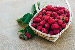 Red raspberries in a wooden basket. Red forest raspberries in a wooden basket Royalty Free Stock Images