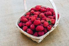 Red raspberries in a wooden basket. Red forest raspberries in a wooden basket Royalty Free Stock Photography