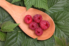 Red raspberries in a wooden spoon lying on the raspberry leaves Royalty Free Stock Photo