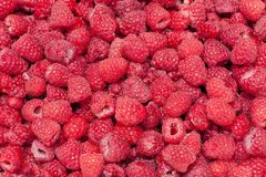 Red raspberry Stock Photo