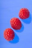 Red Raspberry Royalty Free Stock Photo