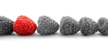 Red raspberry and B&W. On white background Stock Photos