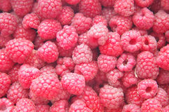 Red raspberry background. Close-up Royalty Free Stock Photos