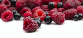 Red raspberry and black currant. Raspberries against the background of a heap of raspberries and currants Stock Photos