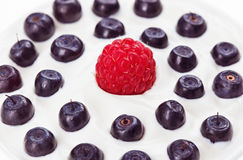 Red raspberry and blue bilberry with sour cream. Food background Stock Image