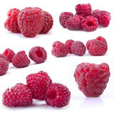 Red raspberry Collection Stock Image