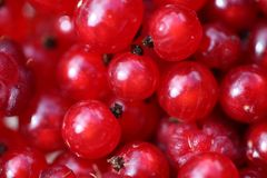 Red raspberry and Red currant. Soft focus stock photo