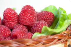 Red raspberry Stock Photos