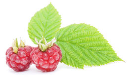 Red raspberry fruits isolated Stock Photography