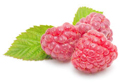 Red raspberry fruits Royalty Free Stock Photo