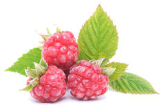 Red raspberry fruits Stock Photo