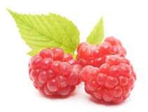 Red raspberry fruits Stock Images