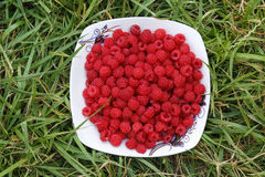Red raspberry on green grass. Red raspberry on white plate on green grass Stock Images