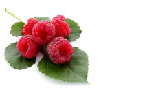 Red raspberry with green leaf. Berries ripe, red raspberry with green leaf isolated on white, fresh food concept Royalty Free Stock Photo