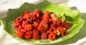 Red Raspberry On Green Leaf Plate. Fresh Picked Garden Raspberries Royalty Free Stock Images
