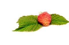 Red raspberry and green leaves on a white . Royalty Free Stock Images
