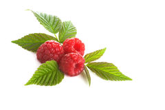 Red Raspberry Isolated Stock Images
