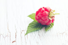 Red raspberry Royalty Free Stock Images