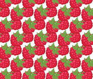 Red Raspberry pattern Stock Image
