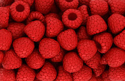 Red raspberry texture or backround Stock Image