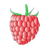 Red Raspberry Stock Photo