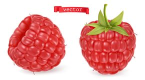 Free Red Raspberry Vectorized Image. Fresh Fruit. 3d Realistic Vector Icon Stock Photo - 159188840