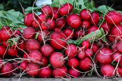 Radish background from farmers market. Red raw radish background from farmers market Royalty Free Stock Photos