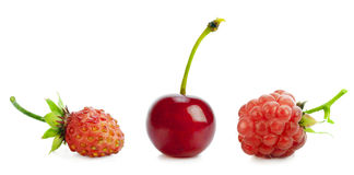 Red wild berries row Royalty Free Stock Photo
