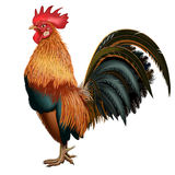 Red realistic cock on a blank background Royalty Free Stock Image