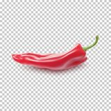 Red realistic pepper. Vector illustration for your projects Royalty Free Stock Image