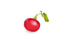 Red redish vector Stock Image