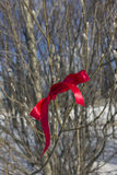 Red ribbon on a branch Royalty Free Stock Images