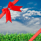 Red ribbon with corner bow. Red  Cross ribbon bow on Green field, grass, blue sky and white clouds Royalty Free Stock Images