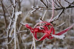 Red ribbon with featherd white frost Stock Images