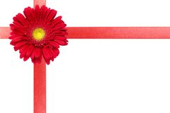 Red ribbon with flower on white card Royalty Free Stock Photography