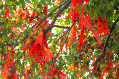 Red Ribbon on a Wishing Tree in Lianhuashan Lotus Hill, Guangzhou, China Stock Photos