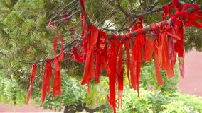 Red ribbon wrapped around branches,lush ginkgo tree in breeze,Trunk,forest,woods. stock video
