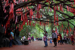Red ribbons on love tree Royalty Free Stock Photo
