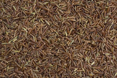 Red rice Royalty Free Stock Image