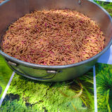Red rice Stock Images