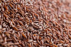 Red rice, grains closeup. Bhutanese. Unpolished, uncooked, natural, diet, raw for traditional asian cuisine, dish Royalty Free Stock Images