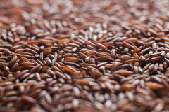 Red rice, grains closeup. Bhutanese. Unpolished, uncooked, natural, diet, raw for traditional asian cuisine, dish Royalty Free Stock Photo