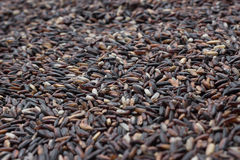 Red Rice Grains Royalty Free Stock Photography
