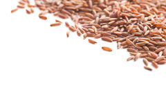 The red rice. Stock Images